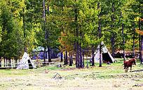 鄂温克族猎民宿营地