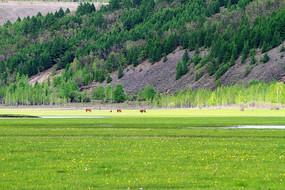 丰茂的牧场水草