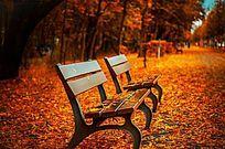 秋天枫叶下的长凳