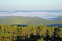 山峦起伏的大森林