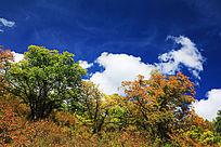 兴安岭森林秋景