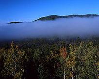 原始森林秋雾