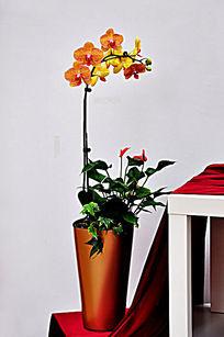黄色蝴蝶兰盆栽