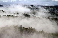 茫茫林海云雾迷漫