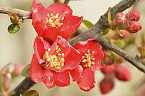 三朵小红花