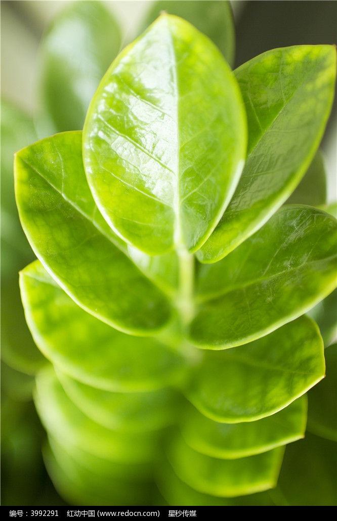 原创摄影图 动物植物 树木枝叶 叶子绿叶叶子  请您分享: 红动网提供