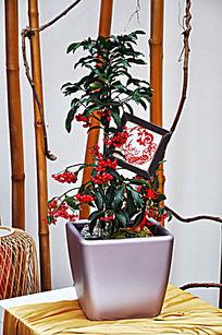 一盆绿化植物装饰