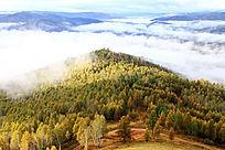 云雾迷漫秋林现