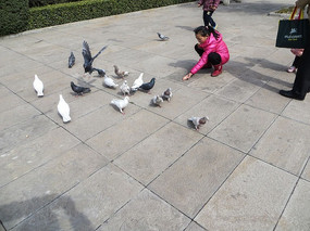 广场喂鸽子