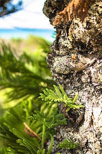 树身上生长的绿叶绿枝