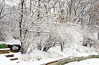 公园里的树挂