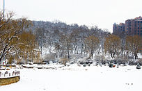公园里雪山上的树林