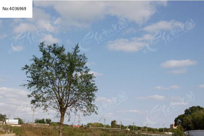 蓝天白云田野中的一棵树图片