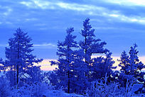 朝霞宁静的雪林