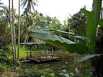 绿色的芭蕉叶