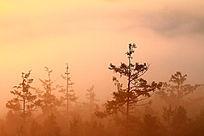 森林朝霞彩雾