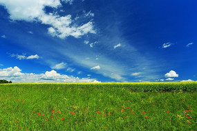 田野草甸盛开野花