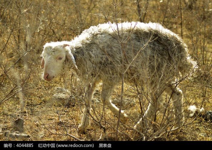 小羊帽子编织教学