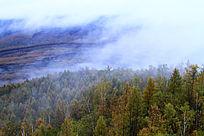 原始森林晨曦雾景
