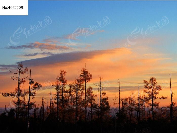 朝阳笼罩的松林图片,高清大图_森林树林素材