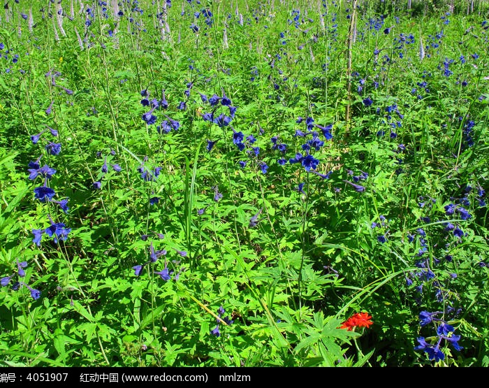 林间草场野花盛开图片