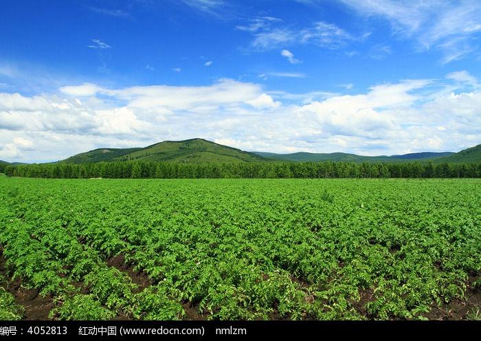 原创摄影图 自然风景 森林树林 农田风景