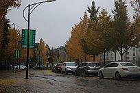 秋风继续吹落叶继续飘