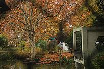 秋天景色依旧很美
