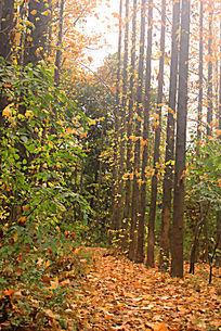 秋天落叶满地