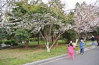 樱花树下的嬉戏