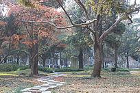 园林道路与树