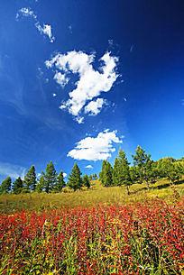 彩色田野和草甸