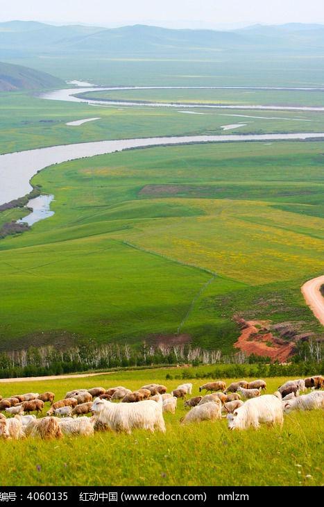 草原羊群图片, 高清 大图