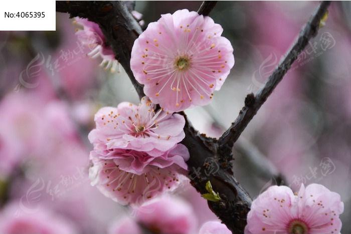 原创摄影图 动物植物 花卉花草 春天的桃花  请您分享: 红动网提供