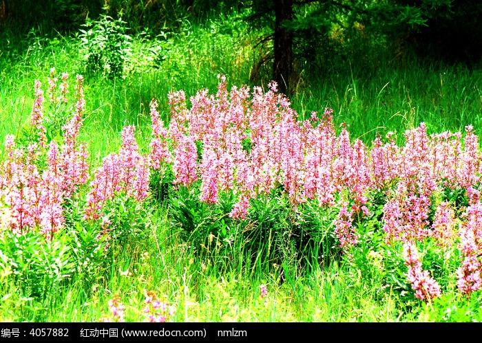 春天的原野图片,高清大图