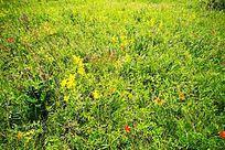 丰茂的牧场植被