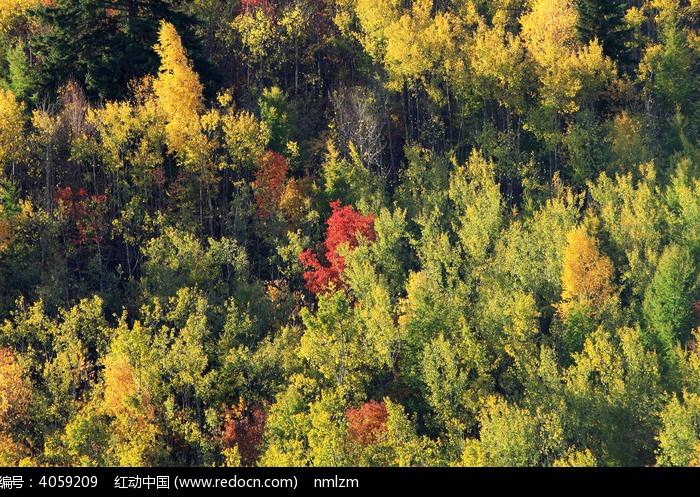 丰宁坝上山林之秋图片