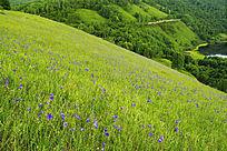 河谷草甸景观