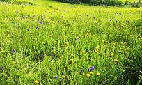 河谷地带湿地景观