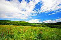 呼伦贝尔草场景观