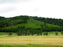 林间耕地麦田