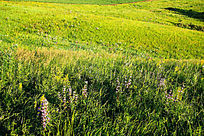 牧场草场之夏