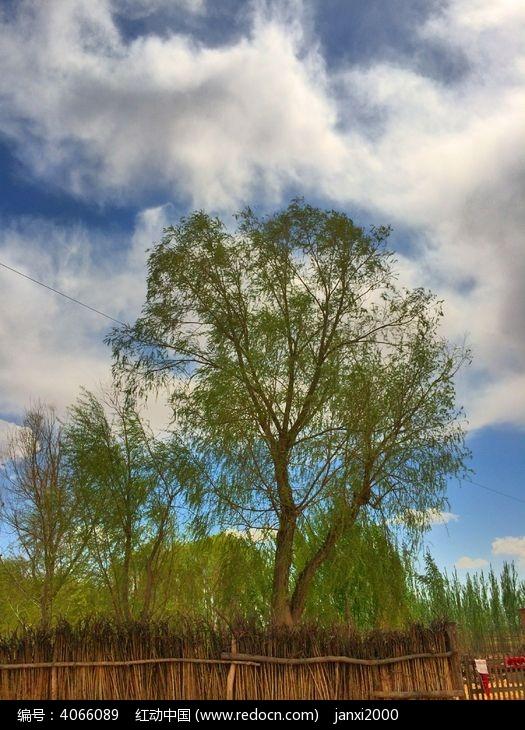 农家小院里的树木图片,高清大图_天空云彩素材