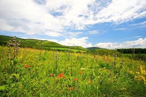 盛开野花的牧场