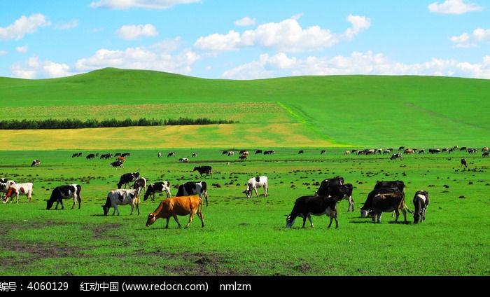 牧场_希望的牧场