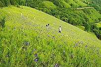 野花盛开的河谷地带