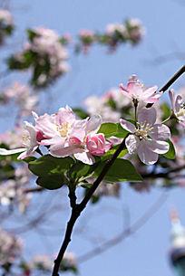 粉红小花背景