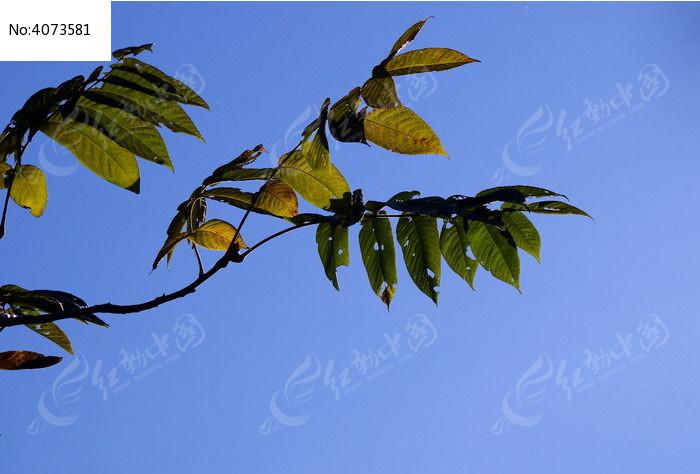 用树叶摆动物造型