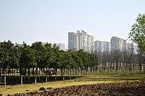 绿色园林后的住宅小区