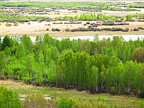 森林湿地风光